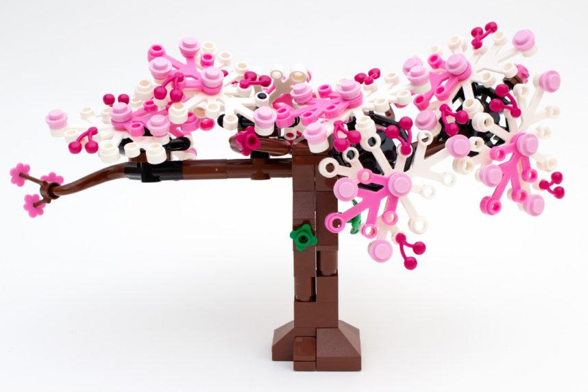 Der Kirschbaum ist eine Augenweide